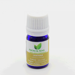 "Lantana oil, ""goldes basket"""