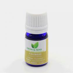 Eucalyptus globulus huile essentielle, Arom&Sens